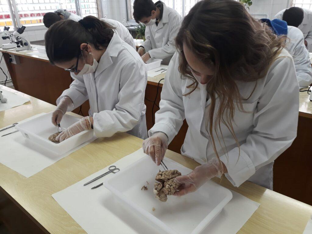 Disección de encéfalo de cerdo 1° Bachillerato